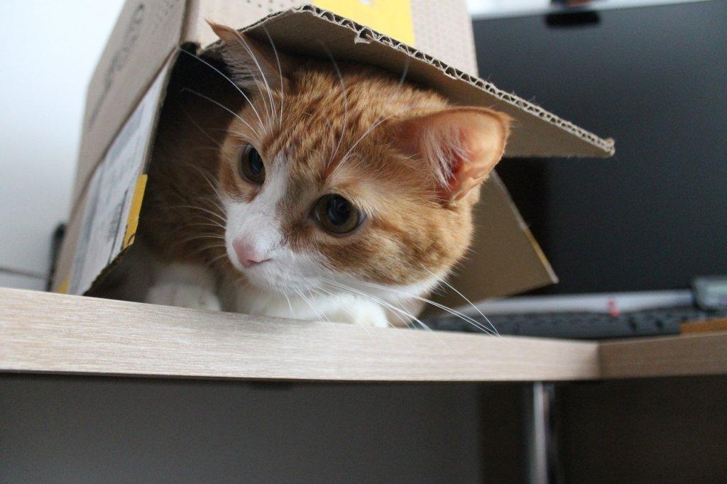 Box Kitty Cat Cat S Eyes Curious  - santiagoalbar15 / Pixabay