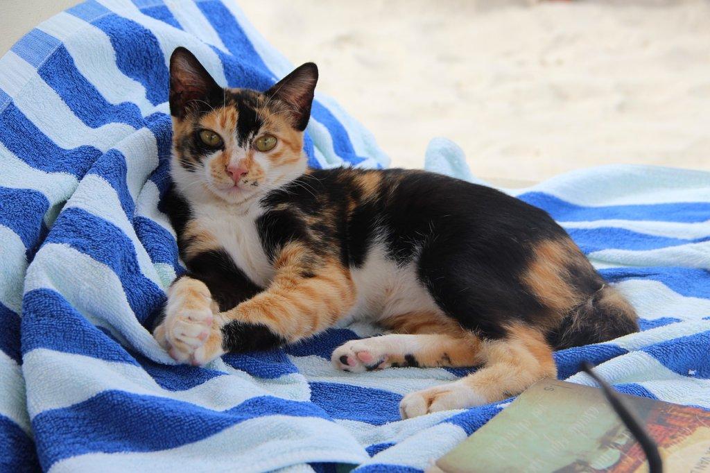 Cat Animal Pet Hanging Out  - Basje3990 / Pixabay
