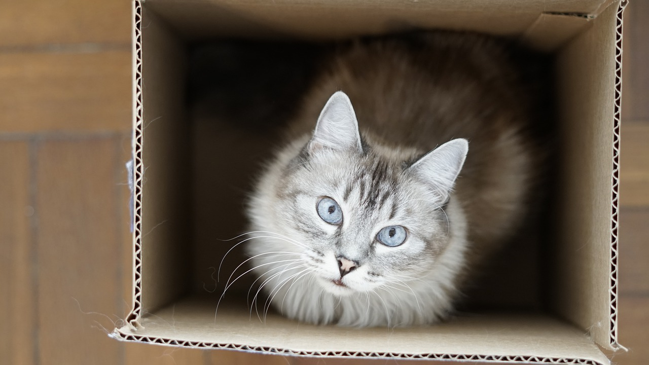Cat Box Think Kitten Feline  - cbetito88 / Pixabay