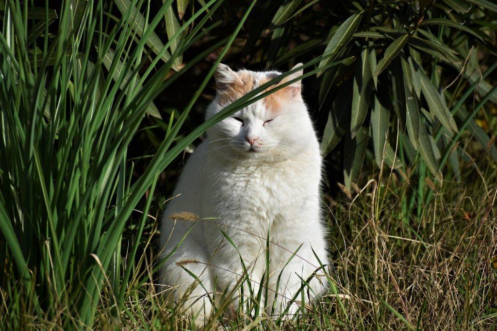 Cat Feline White Stray White Cat  - LauraMR5 / Pixabay