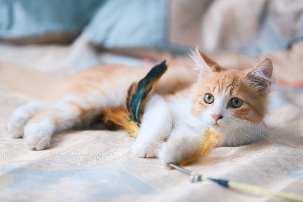 Cat Kitten Orange Cat Portrait  - 京城小坏蛋 / Pixabay