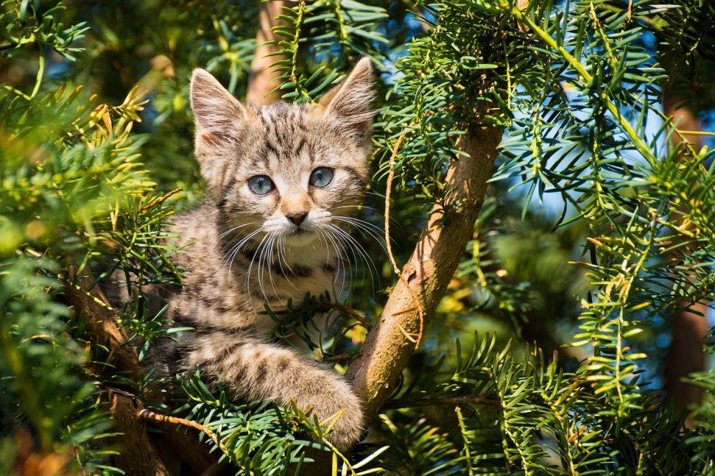 Cat Kitten Pet Tree Tabby  - Katzenliebe / Pixabay