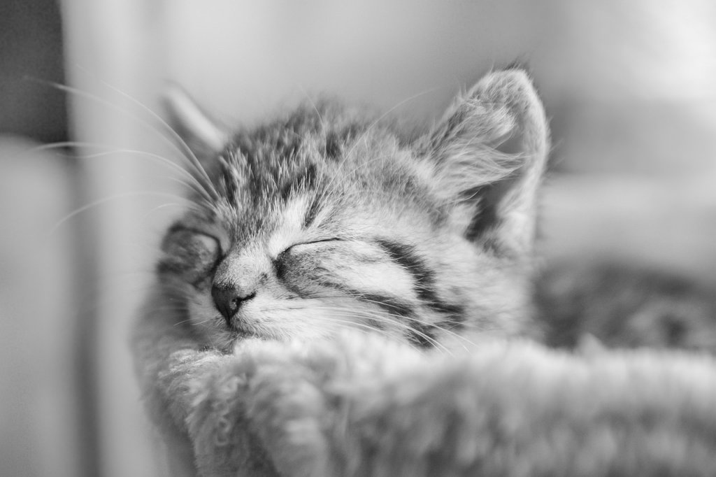 Cat Kitten Sleeping Pet Kitty  - Katzenliebe / Pixabay