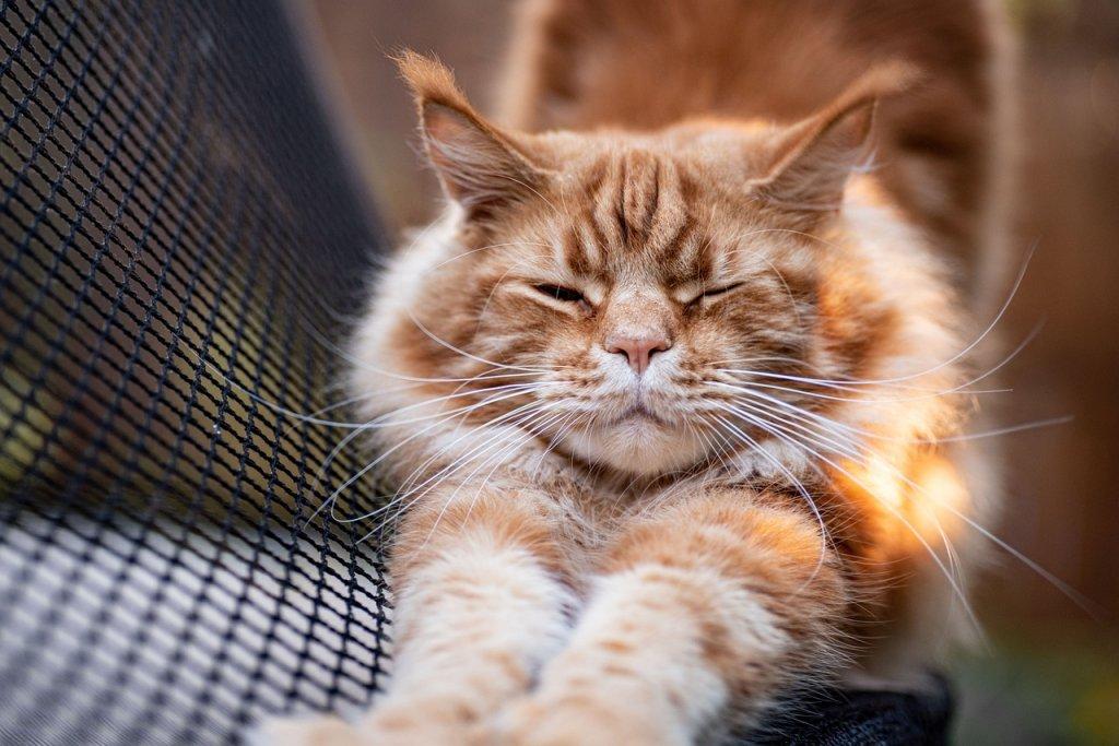 Cat Tabby Stretching Orange Tabby  - ottawagraphics / Pixabay