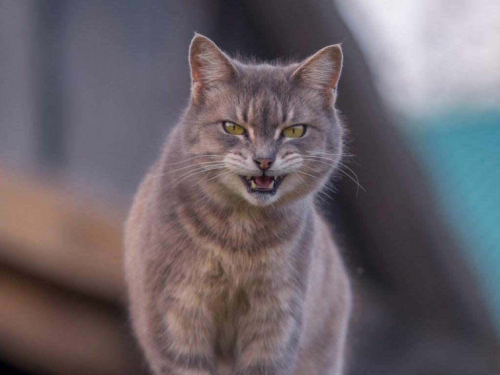 Pets Cat Animals Fur Mammal Cats  - Alexey_Marcov / Pixabay